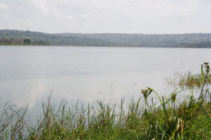 Rweru River threatened by water hyacinth and pollution