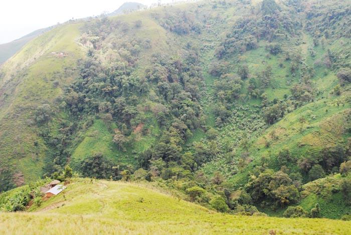 Sur les collines Karehe, Karirimvya et Gakere, de la commune Vyanda, des habitations, des champs de haricots, de manioc, et ce en plein dans la réserve forestière de Vyanda-Rumonge ©Iwacu