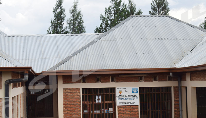 Commune Buhiga: Les éleveurs de vaches déchantent