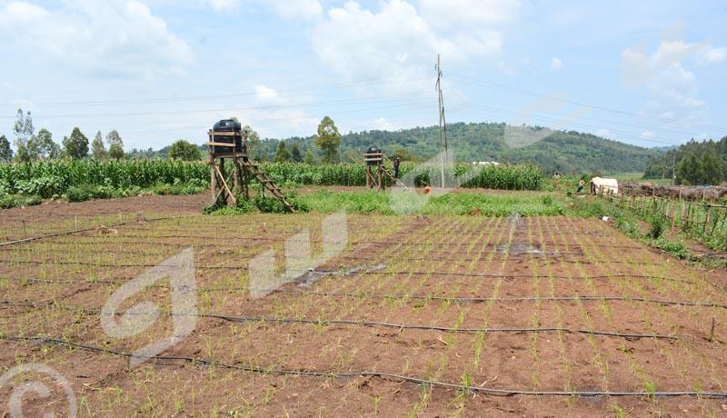 Un procédé innovateur d'irrigation pour mettre fin à la faim
