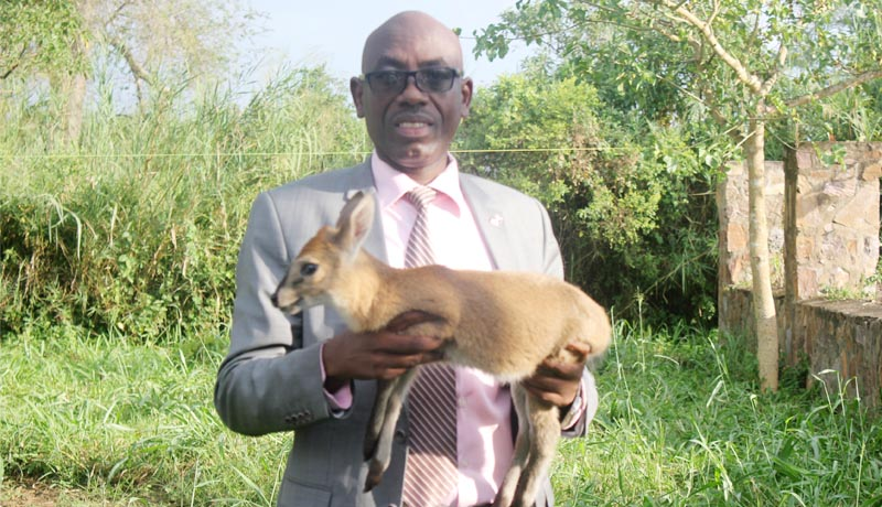« La faune menacée », alerte le ministère de l'Environnement