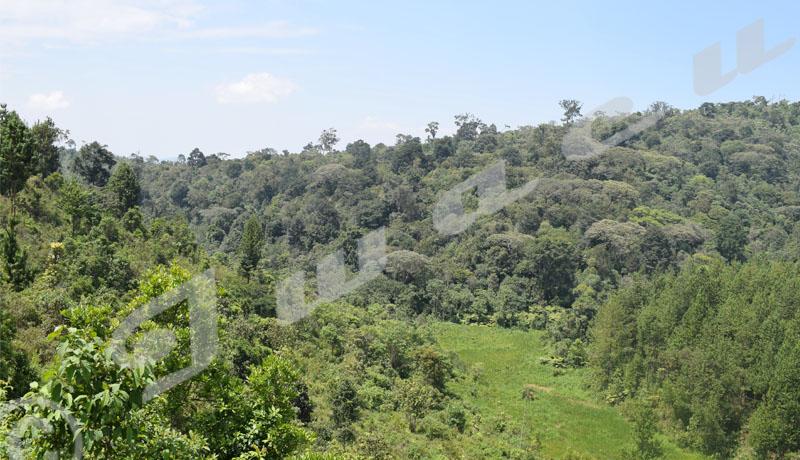 Cibitoke : Crépitements d'armes dans la forêt de Nyungwe, panique à Mugina et Mabayi