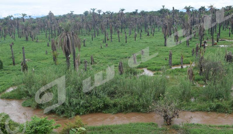 Rumonge : Dama, la tueuse des palmiers