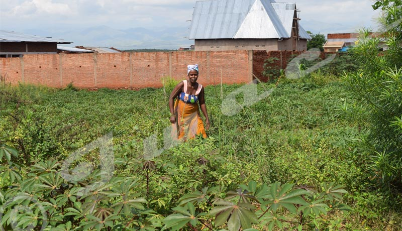Commune Rugombo : Faute d'irrigation, les agriculteurs  redoutent la famine