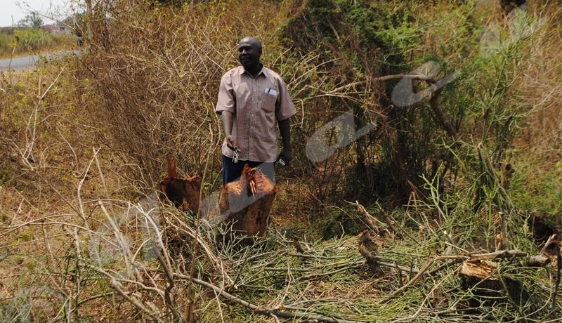 Biodiversité : « Pas de prise de conscience générale du danger »