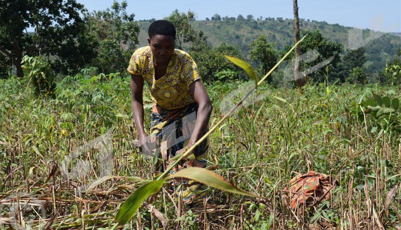 Busoni: Le spectre d'une famine plane toujours