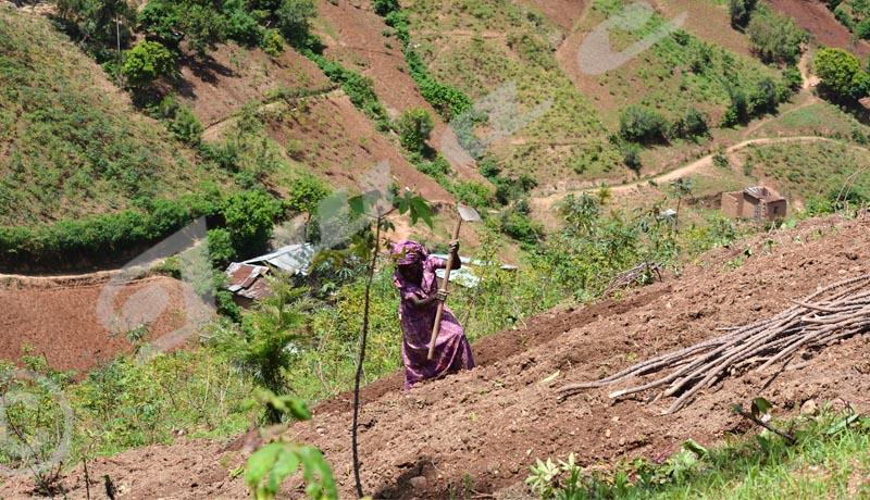 Le cri du cœur des femmes rurales