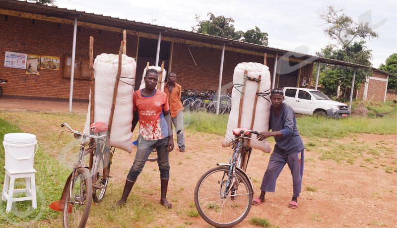 Commune de Rugombo : Grogne des agriculteurs du maïs hybride