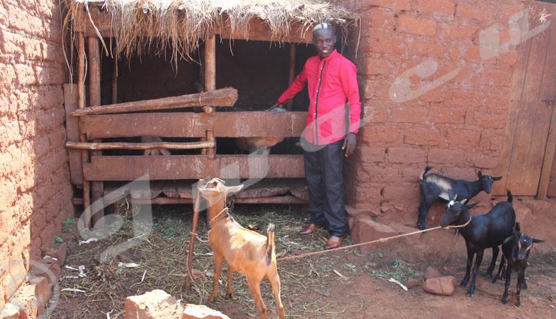 Coopératives Sangwe à Cibitoke : bilan mitigé