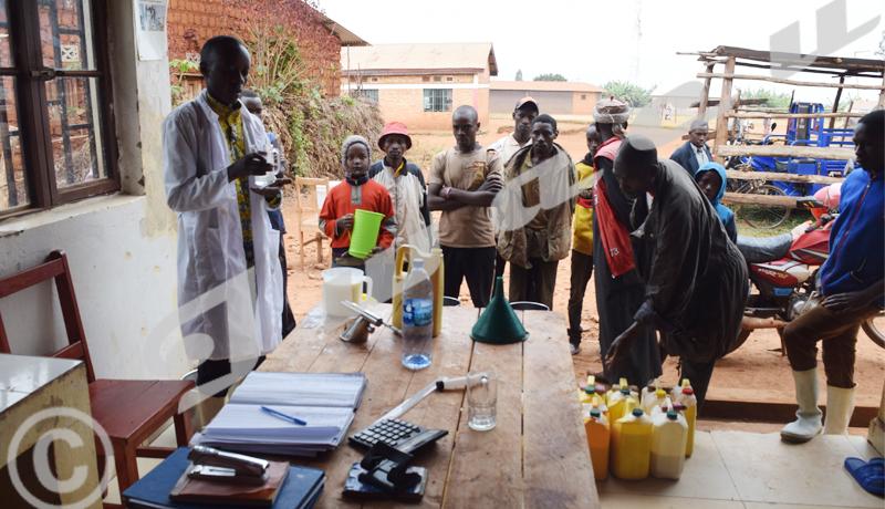 Communes Gashikanwa/Mwumba: Faute de marché, des éleveurs jettent du lait!