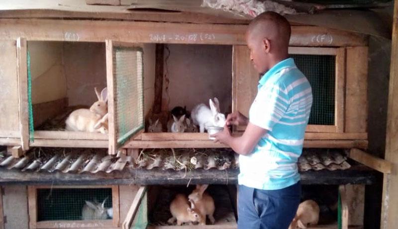 Des lapins pour joindre les deux bouts du mois